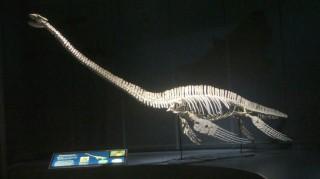 Quái vật hồ Loch Ness ở Nam cực