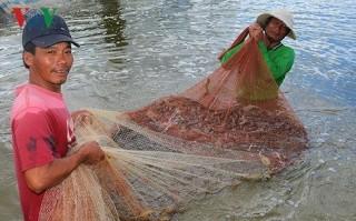 Kế hoạch hành động quốc gia phát triển ngành tôm Việt Nam 