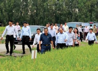 Nông nghiệp An Giang đón đầu cơ hội mới