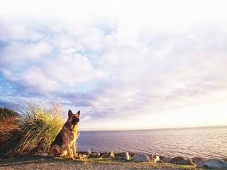 Chó - Người bạn trung thành