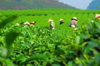 Nông dân hậu cách mạng xanh