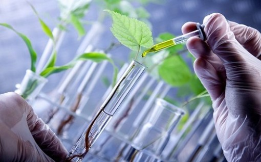 Công nghệ sinh học - công nghệ của tương lai