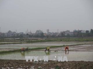 Nông dân khẩn trương xuống đồng gieo cấy vụ Xuân