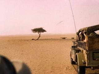 Chuyện ít biết về cái cây cô độc nhất hành tinh