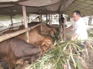 Người chăn nuôi tiếp tục gặp khó