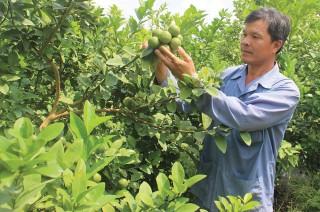 Nhạy bén chọn lựa cây trồng mùa hạn