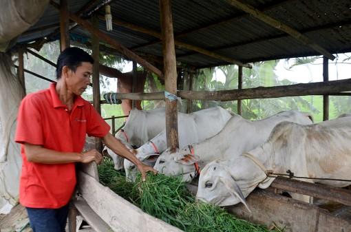 Bình Hòa nỗ lực xây dựng nông thôn mới