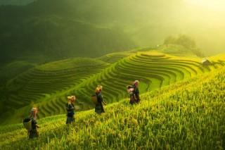 Vịnh Hạ Long, Mù Cang Chải lọt top cảnh đẹp nhất Trái đất