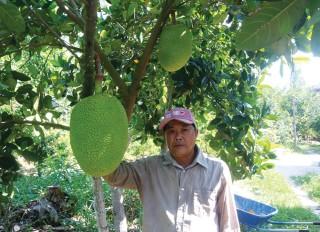 Hiệu quả từ cây mít