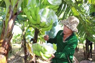 Đưa công nghệ cao đến gần nông dân