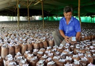 Nông dân Châu Thành phát triển kinh tế từ mô hình trồng nấm