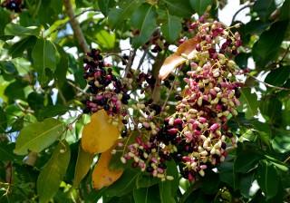 Hương vị trái cây Bảy Núi
