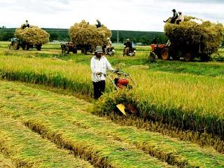 Phó Thủ tướng Trịnh Đình Dũng trực tiếp chỉ đạo việc tái cơ cấu ngành nông nghiệp