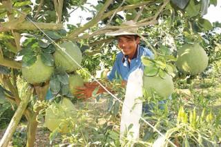 Phát triển nông nghiệp, nông dân, nông thôn