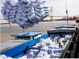 Sản xuất gạo chất lượng cao để hướng đến xuất khẩu 'cái thị trường cần'