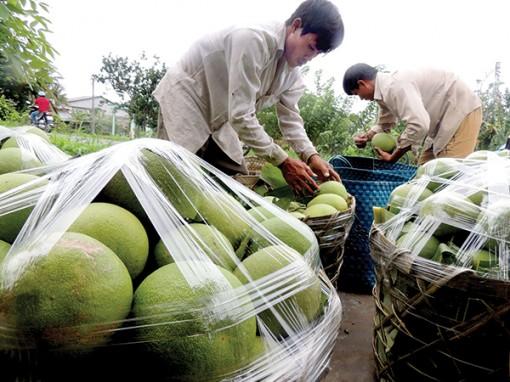 Tạo động lực để nông nghiệp phát triển bền vững