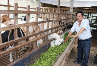 Tận dụng phụ phẩm nông nghiệp làm thức ăn cho gia súc
