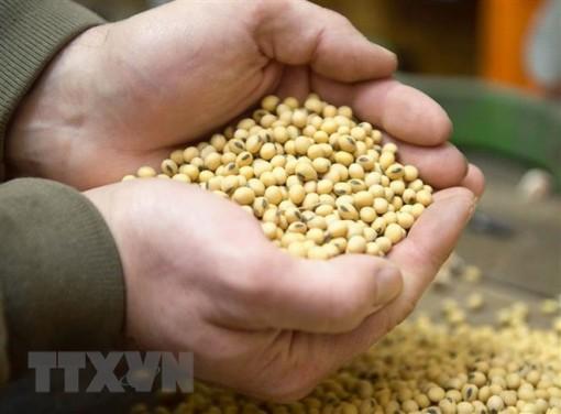 Argentina phê chuẩn trồng đậu tương công nghệ sinh học kháng hạn HB4