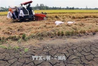 Cảnh báo hạn mặn trong sản xuất vụ Đông Xuân