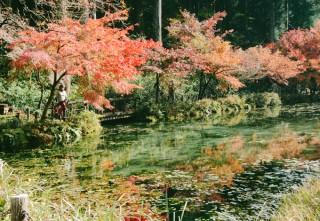 Ao cá Koi ở Nhật bỗng hút khách nhờ giống hệt tranh Monet
