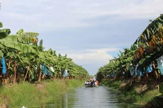 Tri Tôn phát triển nông nghiệp theo hướng hiện đại