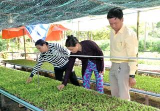 Nông dân Châu Thành chuẩn bị mùa vụ Tết
