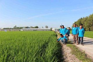Khẩn trương triển khai chuỗi giá trị lúa gạo Japonica