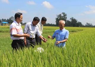 Nâng cao chất lượng, năng suất và hiệu quả trên cùng diện tích đất