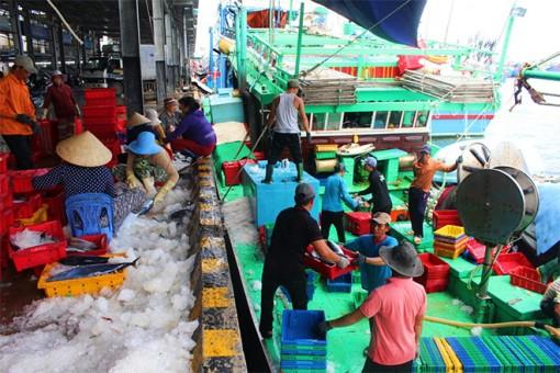 Ngư dân vươn khơi bội thu tôm, cá đầu xuân