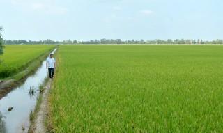 """Sự thật về việc lúa có nguy cơ """"chết khô"""" ở Tân Lập"""