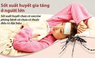 Số ca mắc sốt xuất huyết đang gia tăng ở người lớn