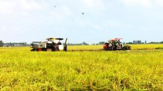 Sau chỉ đạo của Thủ tướng, giá lúa đã tăng thêm 100 đồng/kg