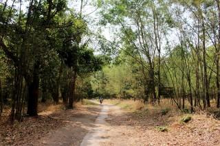 """Hình thành """"vành đai xanh"""" bảo vệ rừng"""