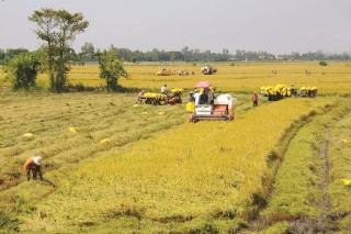 Xuất khẩu gạo, cá tra ngày càng khó khăn