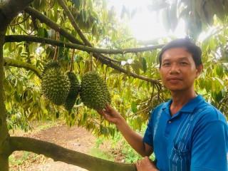 Cây sầu riêng ở Long Kiến
