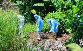 Xử lý nhanh ổ dịch tả heo Châu Phi tại TP. Long Xuyên