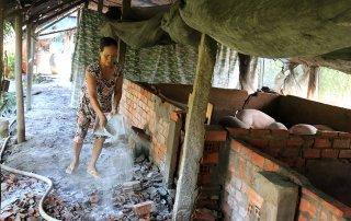 Nâng cao ý thức hộ chăn nuôi heo trong phòng tránh dịch tả heo Châu Phi