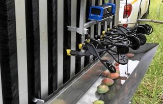 Australia thử nghiệm robot hái xoài đầu tiên trên thế giới