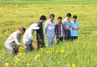 Châu Thành nỗ lực tái cơ cấu nông nghiệp