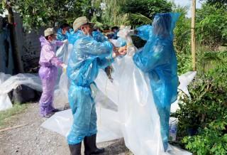 TP. Long Xuyên phát hiện thêm ổ dịch tả heo Châu Phi tại phường Mỹ Hòa