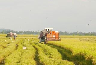 Cách làm hay của Hợp tác xã nông nghiệp Phú Thạnh
