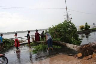 Mưa lớn kèm giông, gió mạnh, khiến nhiều cây cối đổ ngã tại TX. Tân Châu