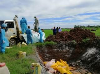 An Phú tăng cường ứng phó dịch tả heo Châu Phi