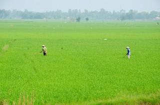 Tăng cường quản lý tài nguyên đất đai