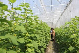 Nông dân Tân Châu năng động trong cơ chế thị trường