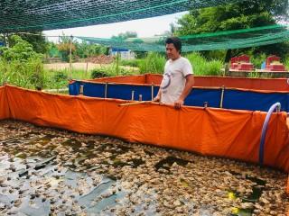 Hiệu quả mô hình nuôi ếch Thái Lan trong bể lót bạt