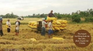 Thị trường xuất khẩu gạo của Việt Nam