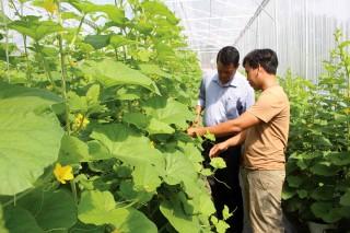 Nông nghiệp ứng dụng công nghệ cao góp phần thay đổi nhận thức nông dân