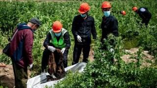 Syria phát hiện hố chôn hàng trăm người tại thành phố Raqa