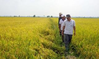 Sản xuất lúa, gạo sạch